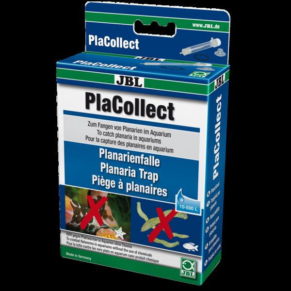PlaCollect - Planarienfalle die Planarienfalle zur Eindämmung von unerwünschten Besuchern bei Wiebies Aquawelt