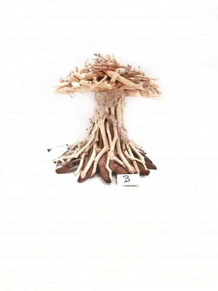 Garnelen Mammutbaum, Pilz Bonsai, Aquscaping Bonsai für dein Aquarium Aquariumdekoration