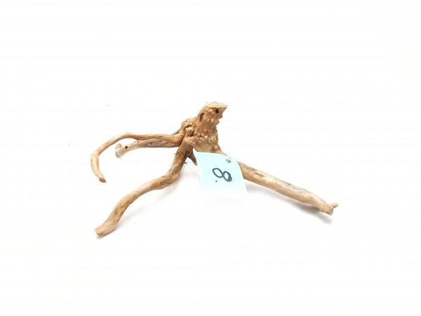 Nano Fingerwurzel Nr. 8 für dein Aquarium. Nano Fingerwurzeln online kaufen