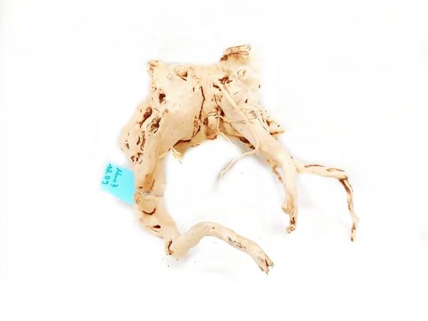 Aquariumwurzel kaufen spiderwood und fingerwurzeln online bestellen