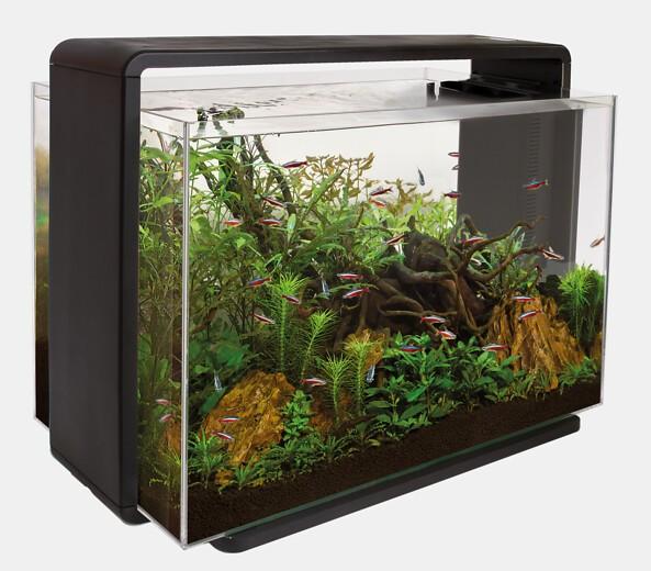Das Home 80 Deginaquarium von Superfish und weitere tolle Aquarien, Zierfische und garnelen bei Wiebies Aquawelt