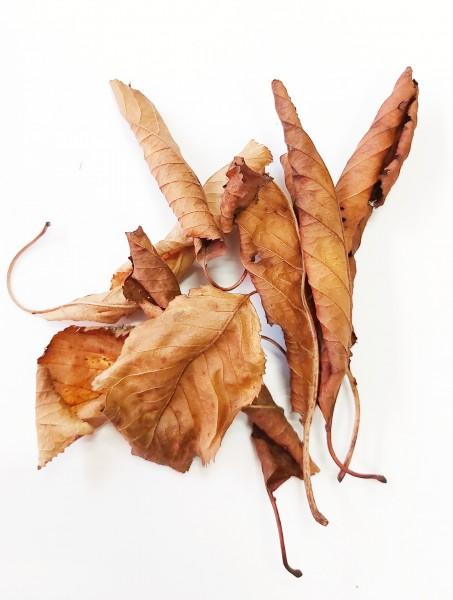 braune Kirschblätter 20 Stück