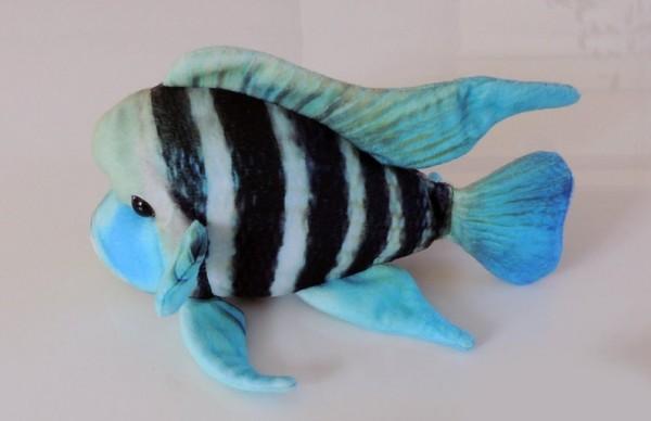 Beulenkopffisch - frontosa Plüschbarsch Tanganjika See Buntbarsch zum Kuscheln