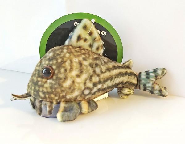 Corydoras Sterbai Plüschwels, Plush pleco Kuschelwesl Panzerwels Sterbai