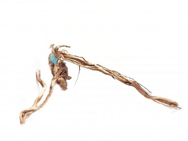 Dragonwood und Aquarumeinrichtung jetzt online kaufen