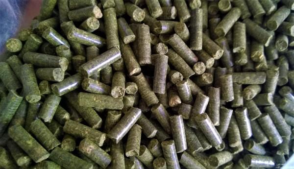 Maulbeerblattsticks, Maulbeersticks für eine gesunde und otimale Ernährung von Garnelen und Schnecken, Neocaridinas und Caridinas