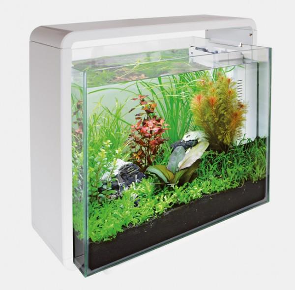 Das Home 40 Deginaquarium von Superfish und weitere tolle Aquarien, Zierfische und garnelen bei Wiebies Aquawelt