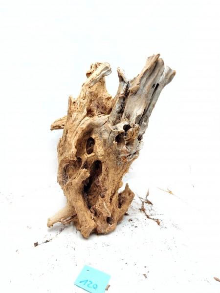 Große Mangrovenwurzel kaufen für tolle Aquarien einzigartige Mangrovenwurzel bestellen bei Wiebies Aquawelt
