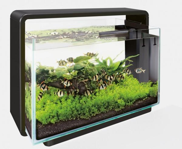 Das Home 60 Deginaquarium von Superfish und weitere tolle Aquarien, Zierfische und garnelen bei Wiebies Aquawelt