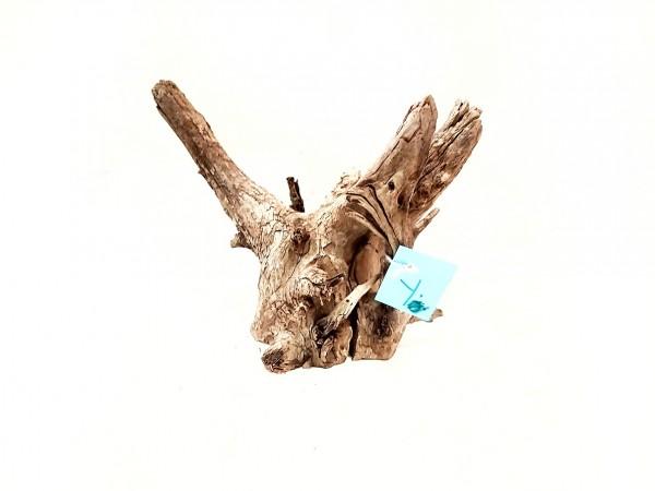 Fantasy Wood Y tolle Aquariumweuzel online kaufen