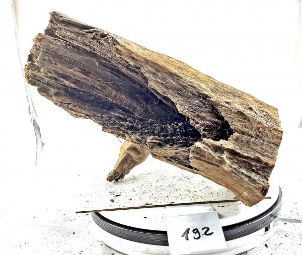 Mangrovenwurzel Dekowurzel Wood fürs Aquarium Mangrovenholz Wurzeln  zu günstigen Preisen mit Auswahl
