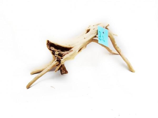 Fingerwurzel - Holz für Welse fingerwurzel kaufen