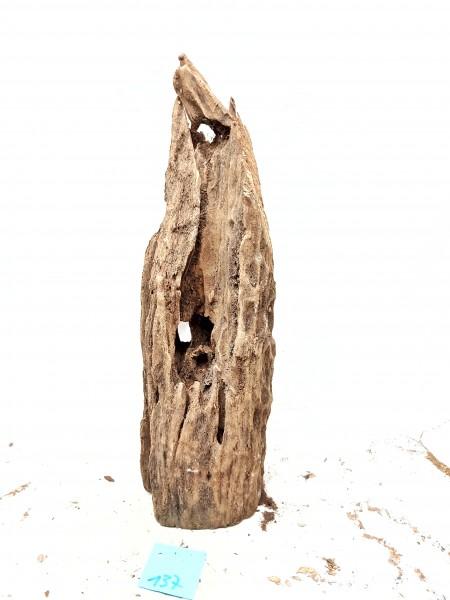 Mangrovenwurzel für Würfelaquarien die einzigartigen Mangrovenwurzeln kaufen bei Wiebies Aquawelt