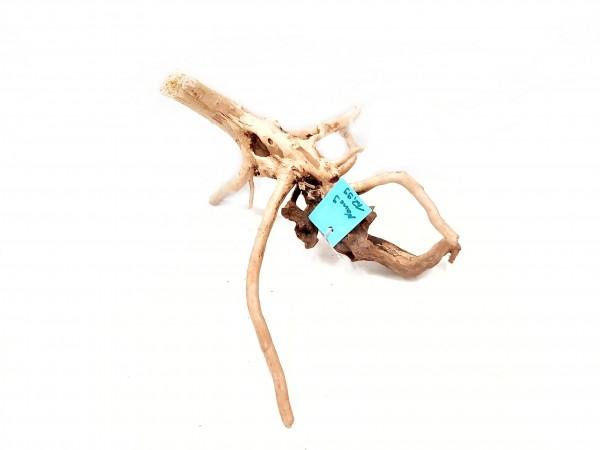 Nano Fingerwurzel Nr. 9 kleine Spiderwoods für dein Aquarium