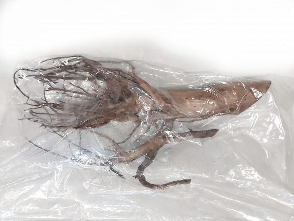 Moorkienwurzel G 55cm x 26cm x 17cm