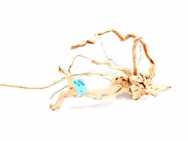 Atemberaubende Fingerwurzeln im Wurzelparadies bei Wiebies aquawelt Aquascapng Wurzel kaufen