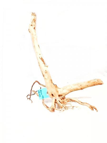 Fingerwurzel spiderwood tolle Wurzeln online kaufen