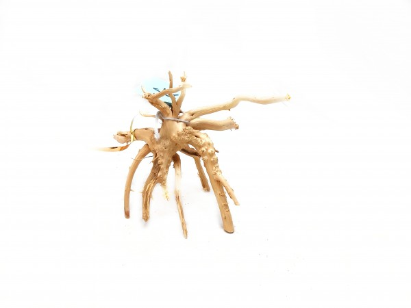 Nano Fingerwurzel kaufen für dein Aquarium