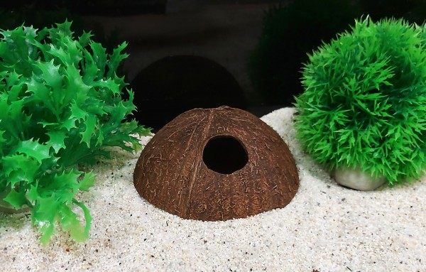 Kokosnusshöhle