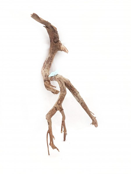Nana Fingerwurzel und talawa Holz für dein Aquarium in 55cm online kaufen bei wiebies aquawelt