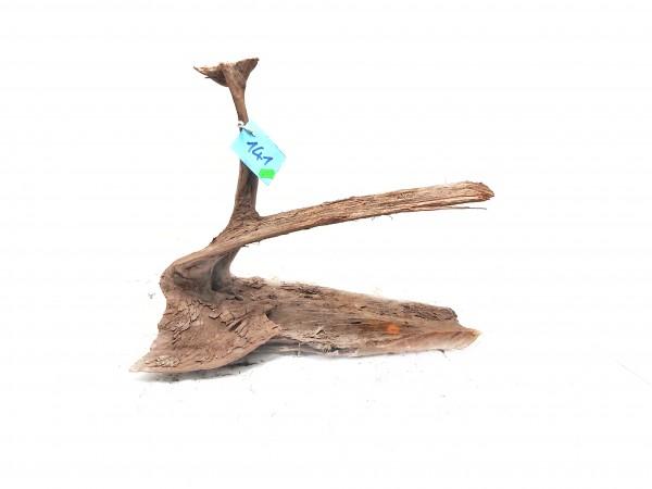 Mangrovenwurzel Nr. 141