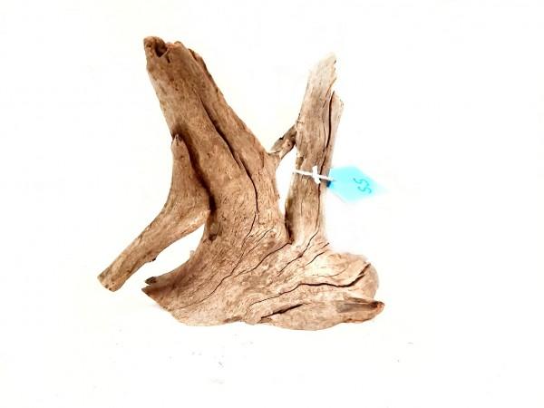 Kleine nano wurzel im Aqaurium, Wurzel terrarium und paludarium.