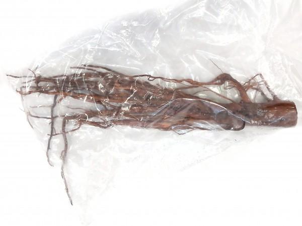 Moorkienwurzel F 64cm x 10cm x 5cm