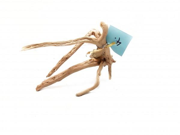 Fingerwurzeln und Moorwurzeln für dein Aquarium im Online Shop