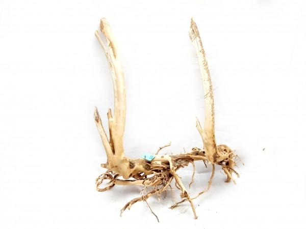 Aquascaping Wurzel kaufen Spiderwood und Fingerwurzeln online kaufen