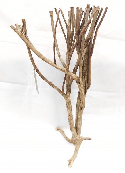 Savannenholzbaum B