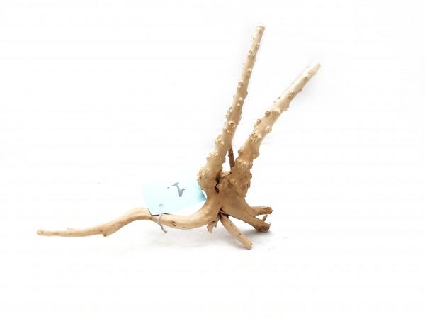 Nano Fingerwurzel Nr. 2 die schönste fingerwurzel für dein Aquarium online kaufen, aquariumdekoration online kaufen
