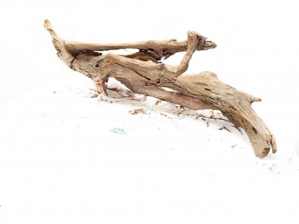 Mangrovenwurzel Nr. 194