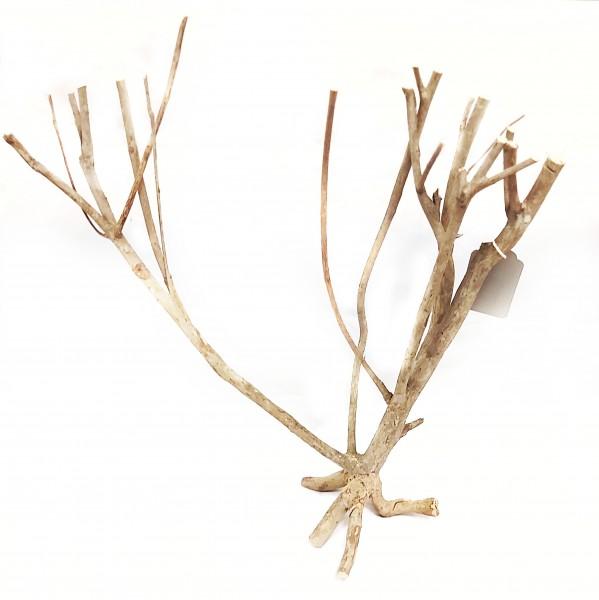 Savannenholzbaum A