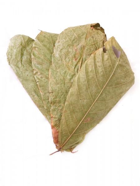 Kakaoblätter in Spitzenqualität als Dekoration im Aquarium und Terrarium und als Garnelenfutter sowie Krebsfutter.