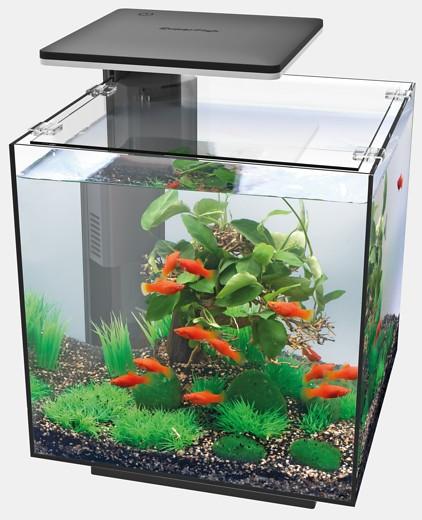 QubiQ 30 das Nano Würfelaquarium das Starter Nanoaquarium für den kleinen Geldbeutel und weitere tolle Aquarien, Zierfische und garnelen bei Wiebies Aquawelt