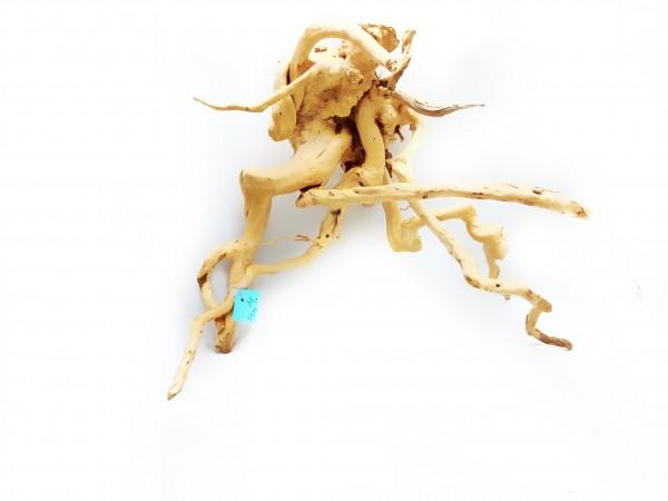 Traumhafte Wurzeln im Aquarium gestalte dein Aquarium mit fingerwurzeln