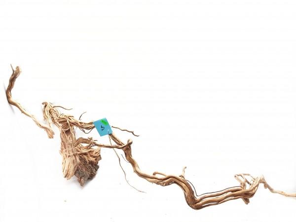 Dragonwood Curl Wood, Aquascaping online bestellen Wurzeln für dein Aquarium bestellen jetzt im Online Shop Aquariumwurzeln