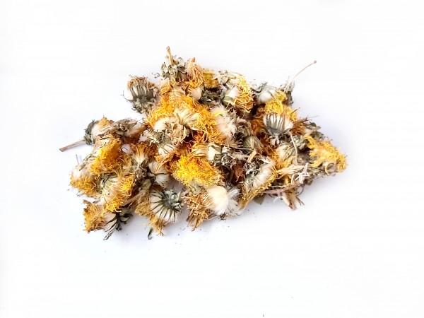 Garnelenfutter, natürliches Futter, Löwenzahn und Löwenzahnblüten Neocaridinas und Tylomelania
