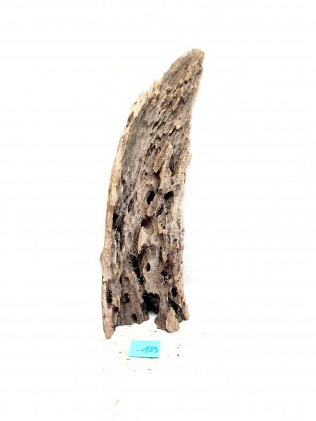 Mangrovenwurzel günstig online kaufen Mangrovenwurzel im Aquarium