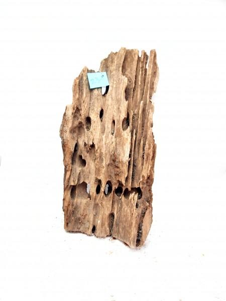 Mangrovenwurzel natürliches driftwood für dein Aquarium Mangrven Wurzel kaufen