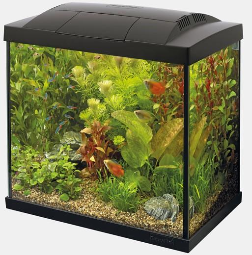 Start 50 Tropical Kit Aquarium das Starter Nanoaquarium für den kleinen Geldbeutel und weitere tolle Aquarien, Zierfische und garnelen bei Wiebies Aquawelt