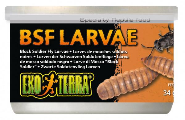 Soldatenfliegen Larven - Exo Terra