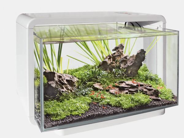 Das Home 25 Deginaquarium von Superfish und weitere tolle Aquarien, Zierfische und garnelen bei Wiebies Aquawelt
