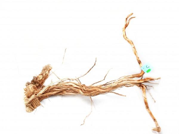 Curl Wood, Aquascaping Holz für dein perfektes Aquarium jetzt Dragonwood kaufen